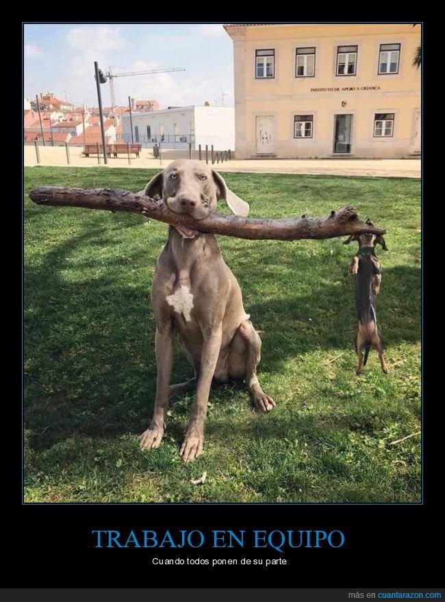 palo,pequeño,perros