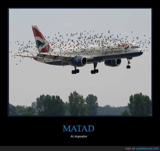 avión,pájaros,wtf