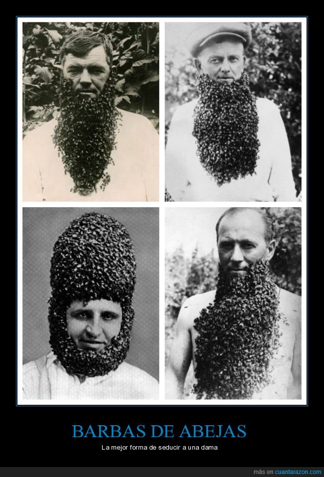 abejas,barba,wtf