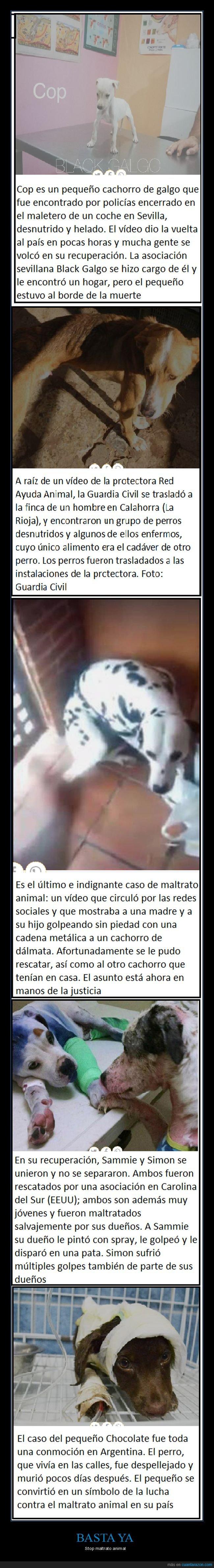 basta ya,stop maltrato animal