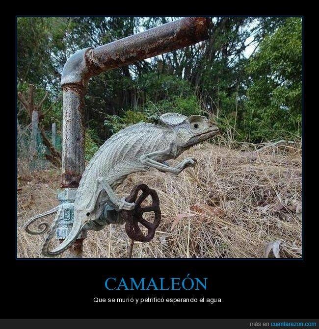 agua,camaleón,esperando,muerto