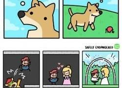 Enlace a Cómics de Safely Endangered que debes conocer y te alegrarán el día