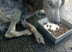 """Enlace a Este perro estaba tan desnutrido que nadie se dio cuenta que era """"de una raza popular"""""""