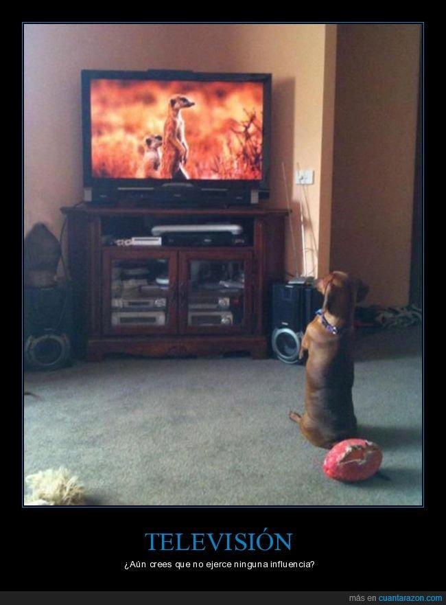 influencia,perro,televisión