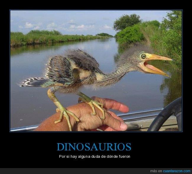 dinosaurios,evolución,pájaro