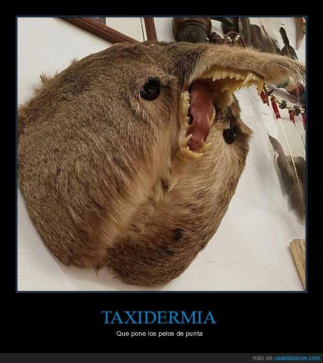 taxidermia,wtf