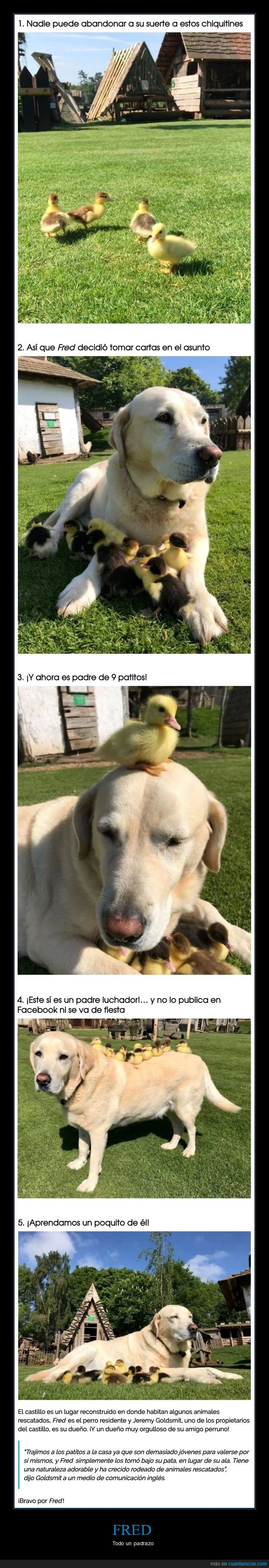 fred,padre,patos,perro