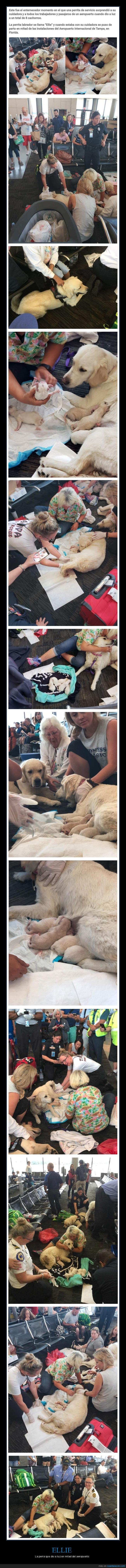 aeropuerto,dar a luz,perra,perros