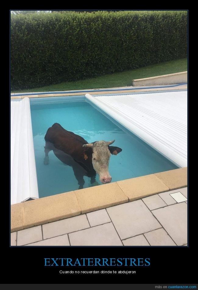piscina,vaca,wtf