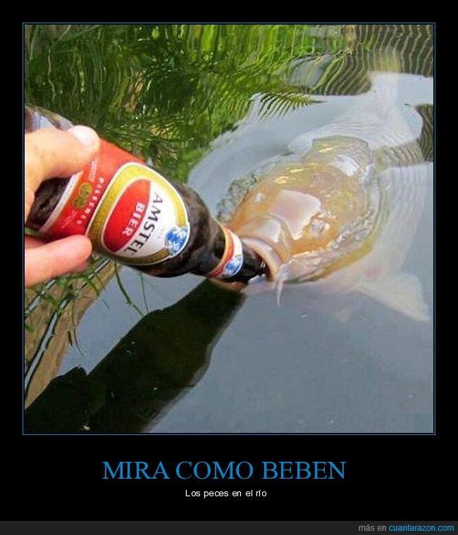 bebiendo,cerveza,pez
