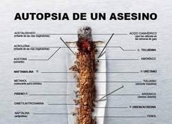 Enlace a Diseccionando un cigarro