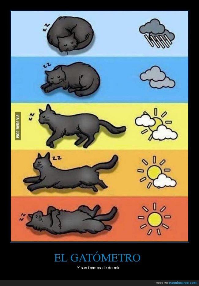 dormir,gatos,temperatura