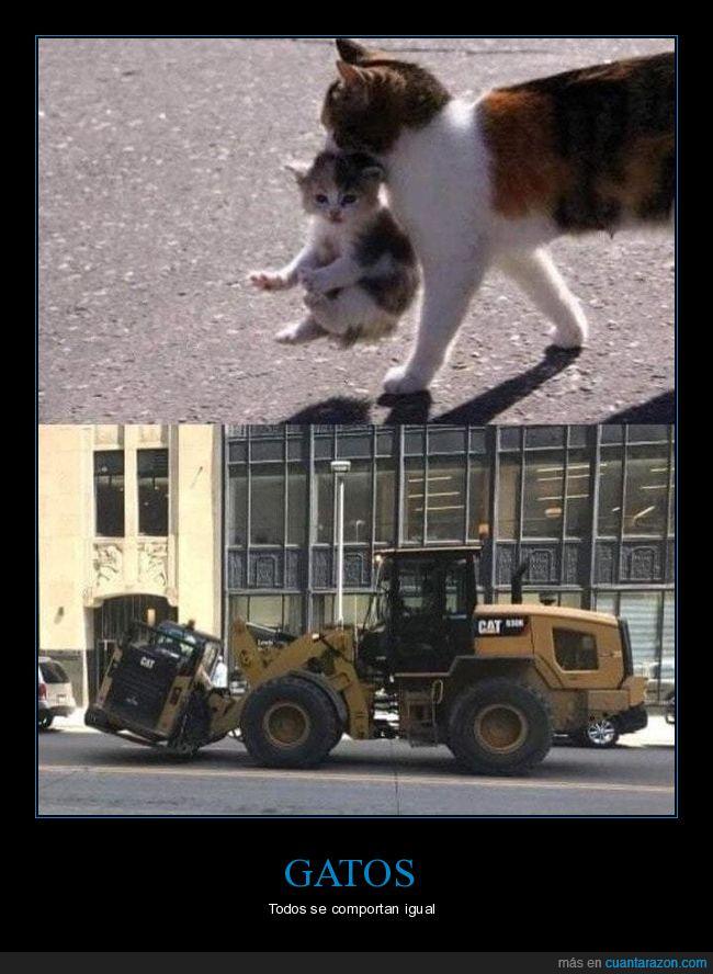 absurdo,cat,excavadoras,gatos,parecidos