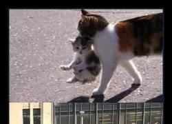 Enlace a Instinto felino