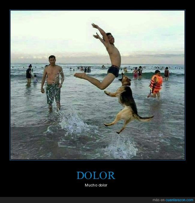 momento exacto,perro,playa,salto