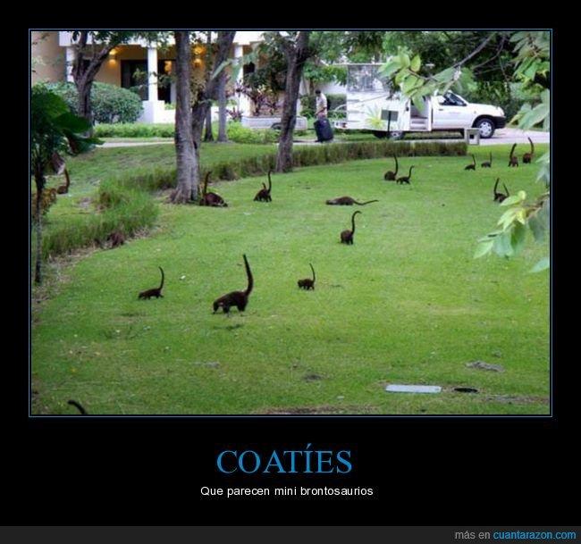 brontosaurios,coatíes,parecidos