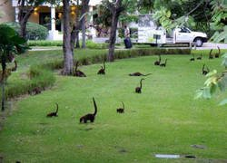 Enlace a Bienvenidos a Mini Jurassic Park