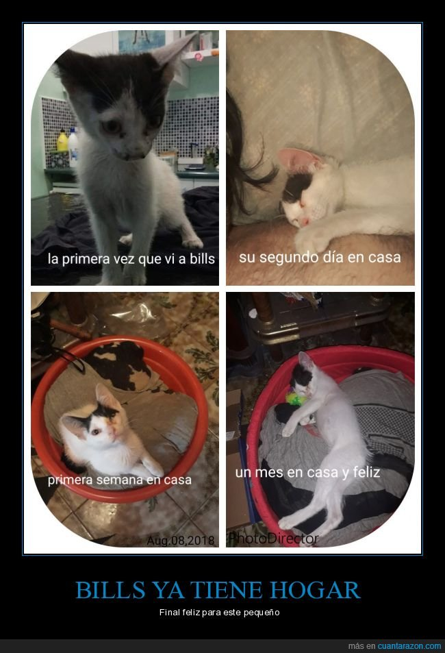 adopción,bills,feliz,gato