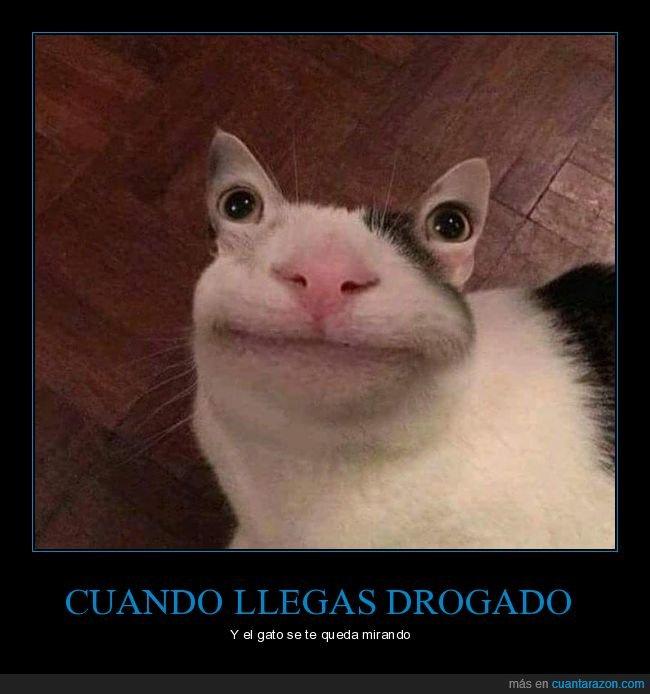 gato,ojos,orejas