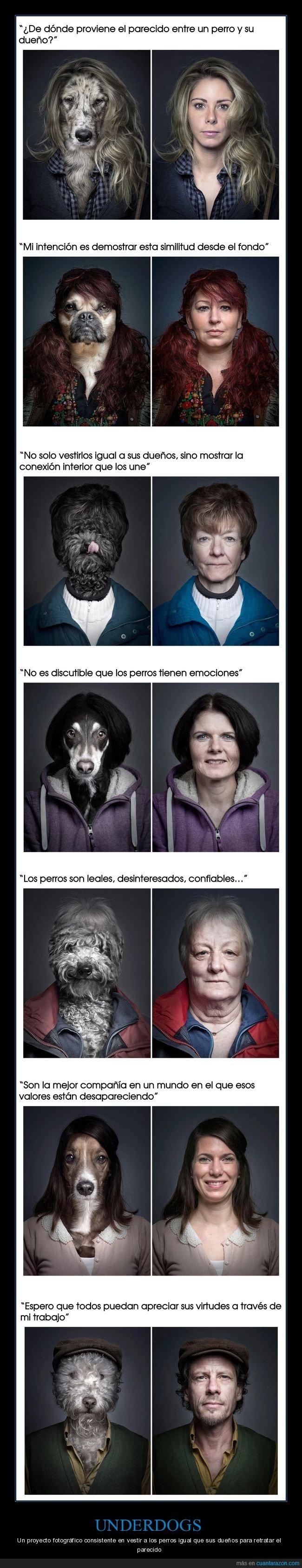 dueños,fotografía,parecidos,perros,underdogs,vestir