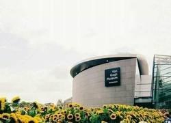 Enlace a Los girasoles del Museo Van Gogh
