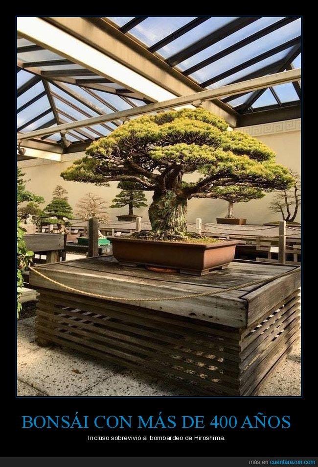 400 años,bonsái,curiosidades,hiroshima