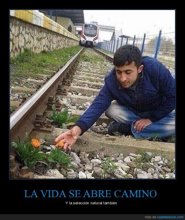 flor,tren,vía