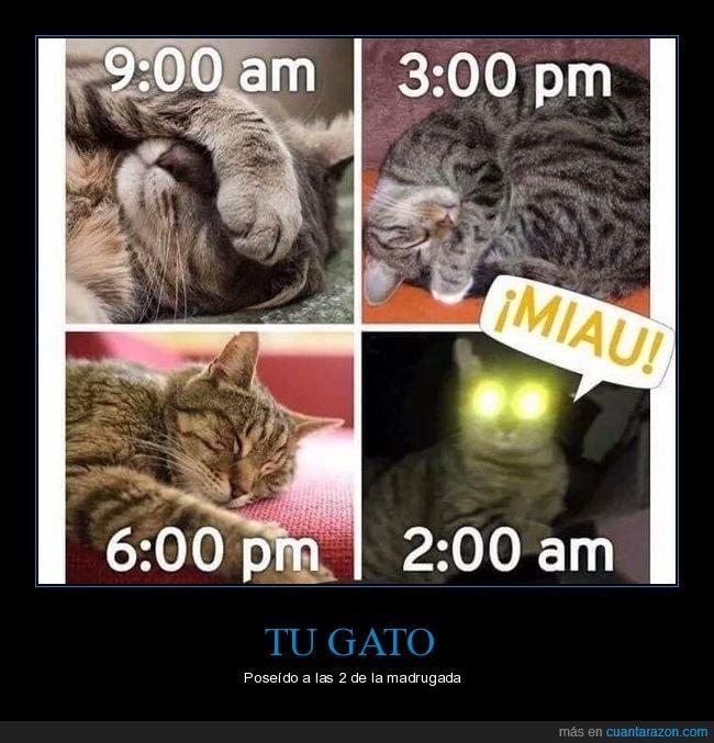 durmiendo,gato,horas