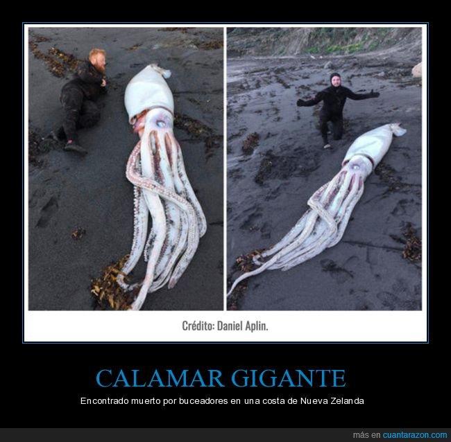calamar gigante,curiosidades,muerto,nueva zelanda