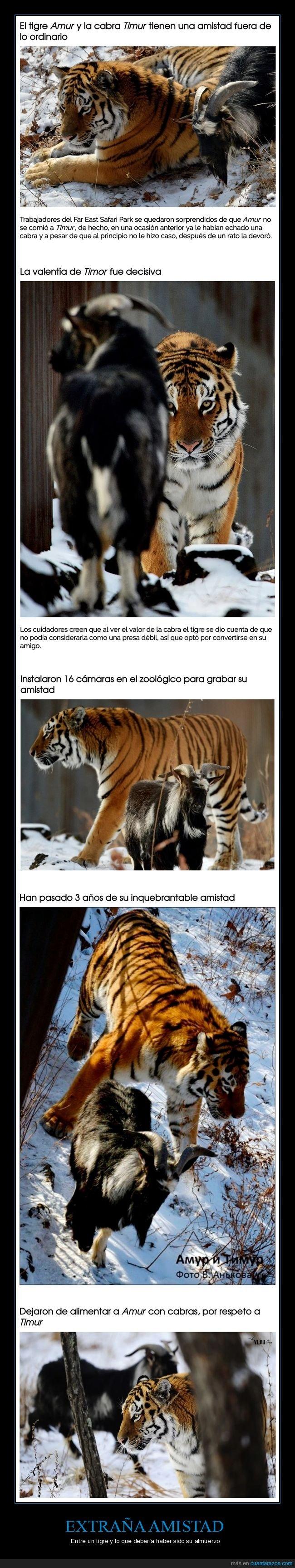 amigos,cabra,el_tio_hardcore,pocholo38 y tus aportes?,tigre,wtf