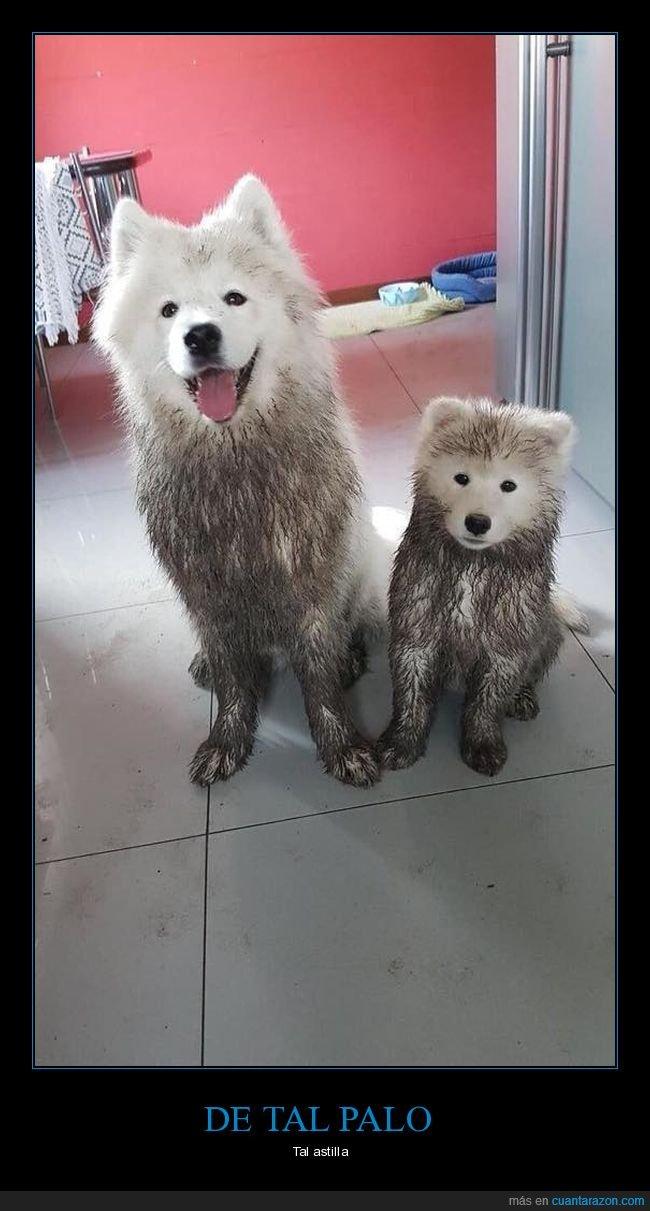 hijo,padre,perros,sucios