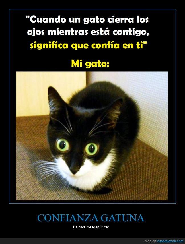 cerrar,confianza,gatos,ojos
