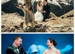Enlace a La reacción de este oso ante una pareja casándose en el zoo not tiene precio