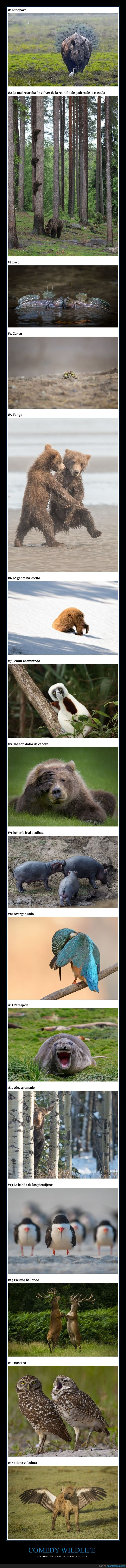 animales,comedy wildlife