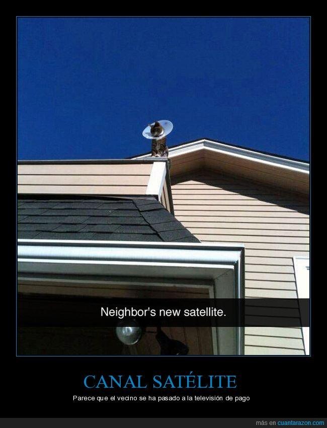 antena parabólica,cono,gatos,tejado