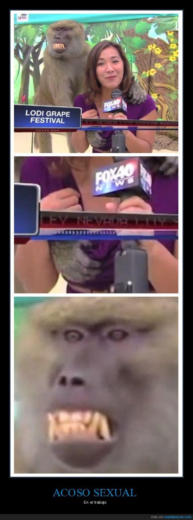 mono,reportera,tocando