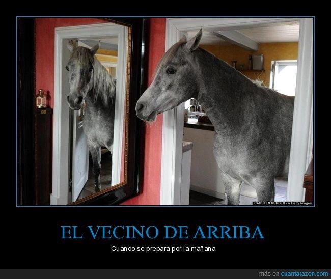 arriba,caballo,ruido,tacones,vecino