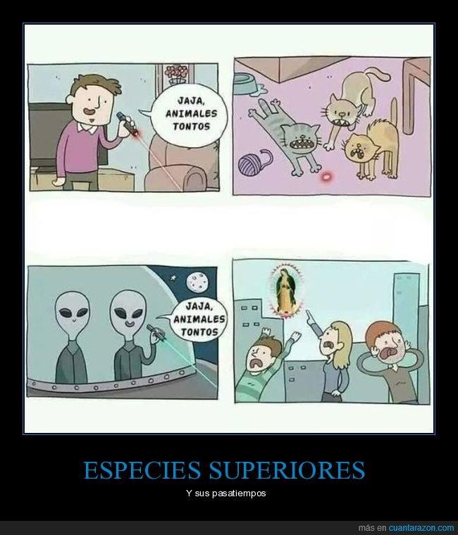animales,extraterrestres,gatos,láser,tontos