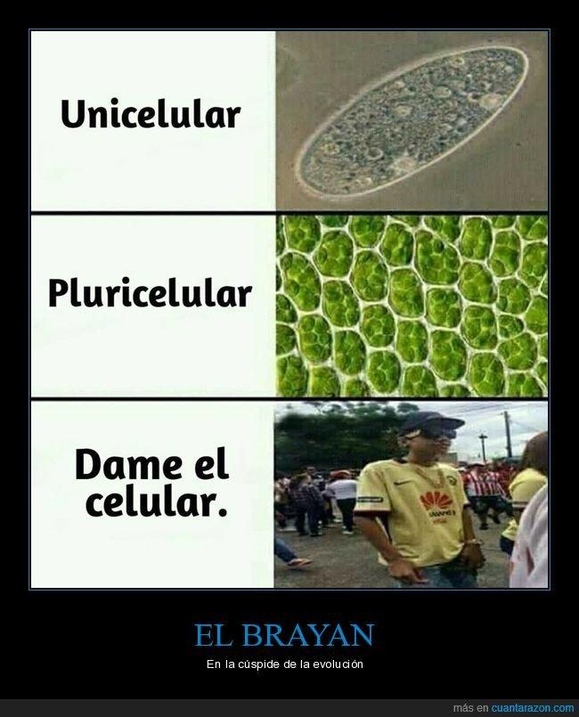 brayan,celular,móvil,pluricelular,unicelular