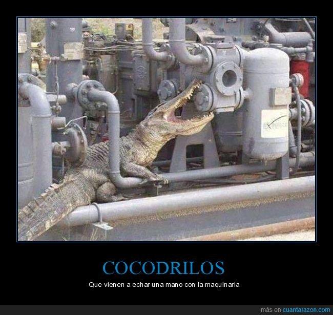 cocodrilo,wtf