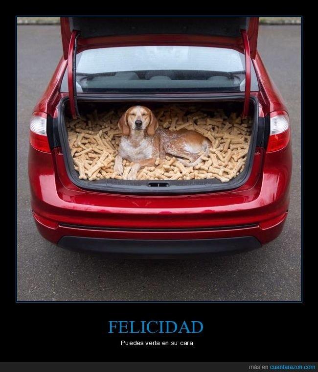 feliz,maletero,perro