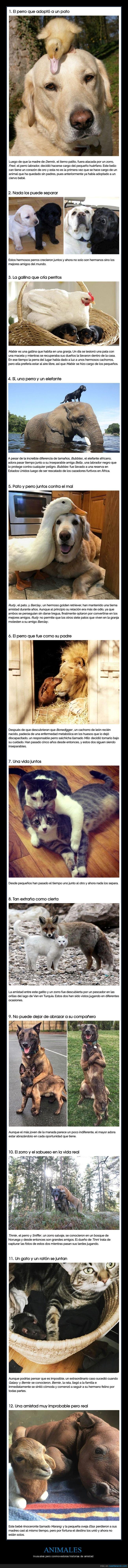 amigos,amistad,animales