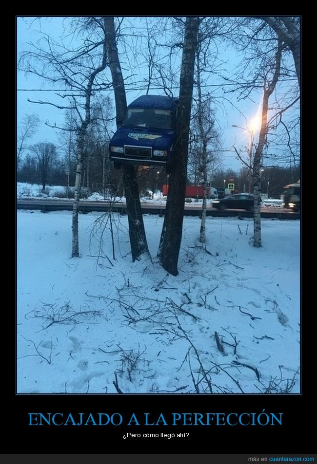 árboles,coche,encajado,wtf