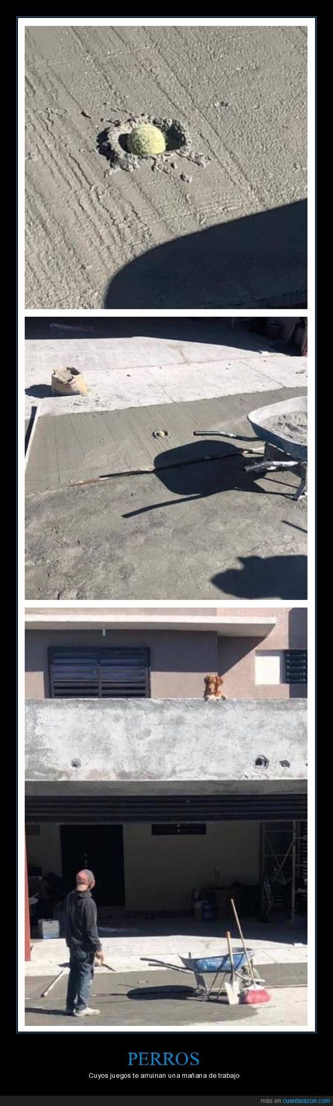 cemento,fails,pelota,perros