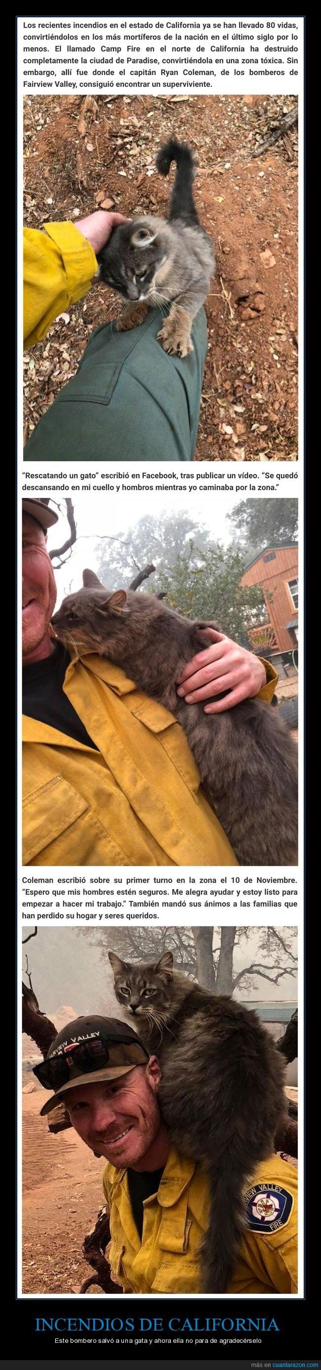 agradecer,bombero,california,gatos,incendios