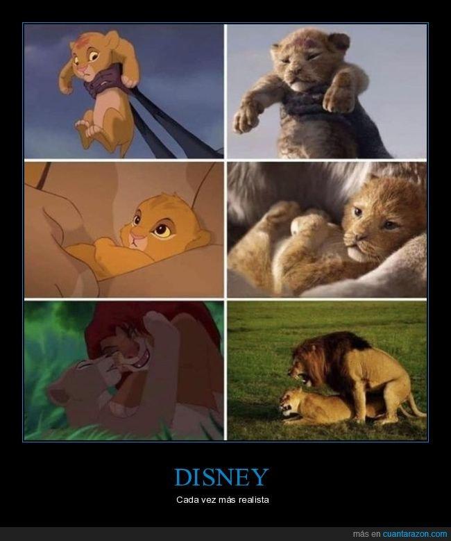 disney,el rey león,leones,realismo