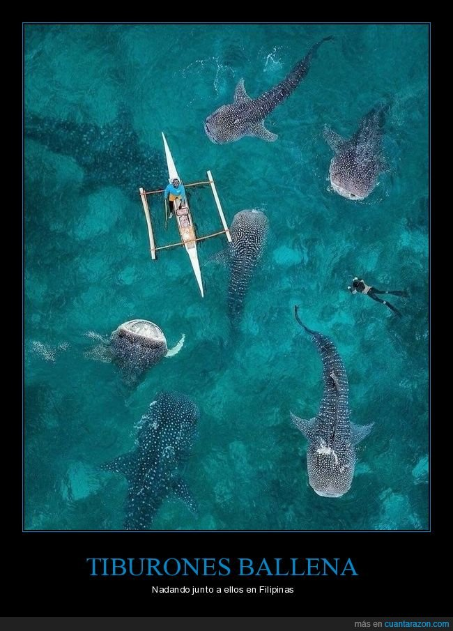 canoa,mar,nadando,tiburones ballena