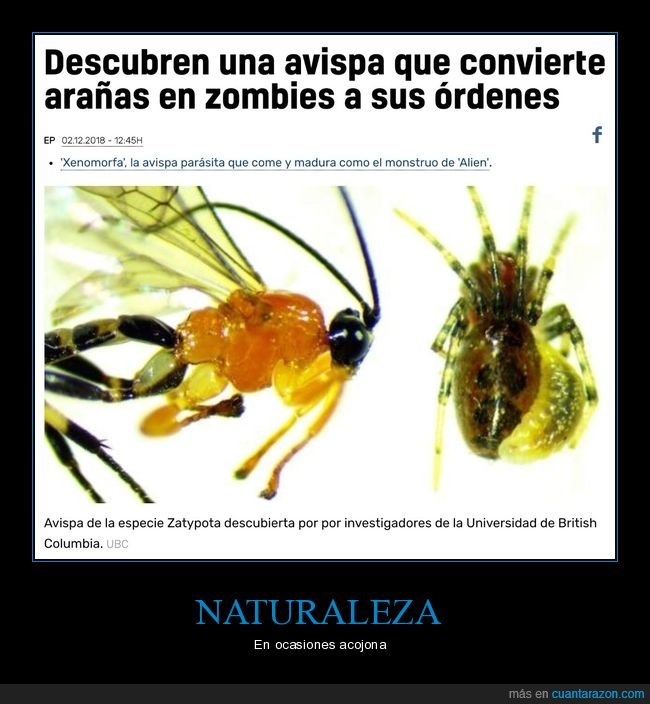 arañas,avispa,zombies