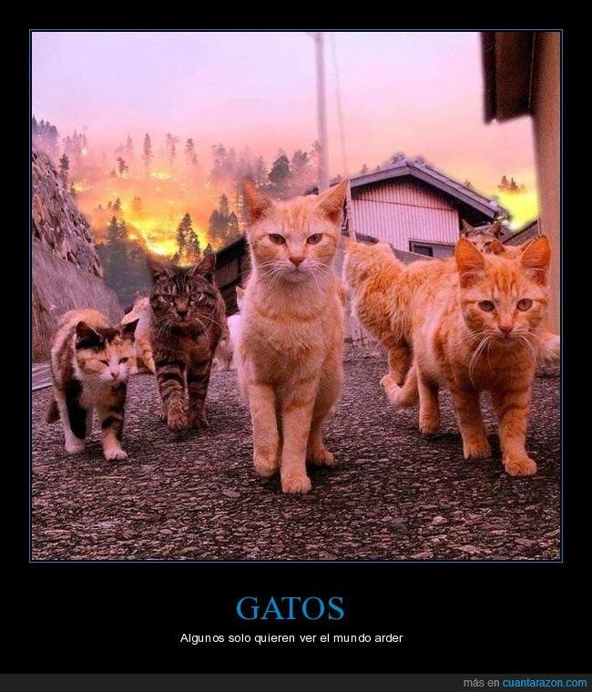 gatos,incendio,wtf