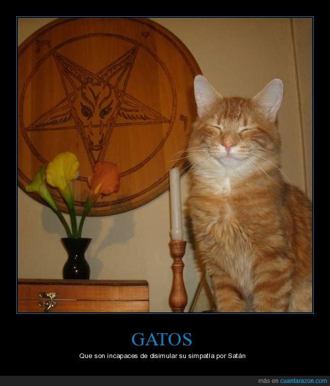 cara,gatos,satán